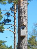 Tree with nesting- box in forest, Lithuania Royalty Free Stock Images
