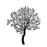 Tree new black Stock Photography