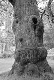 A tree in the New Forest Stock Images