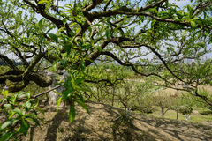 Tree with new leaves on hilltop near city in sunny spring Royalty Free Stock Photos