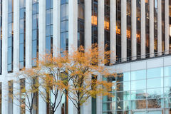 Tree between New York buildings Royalty Free Stock Images