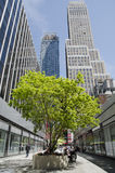 Tree in New York City between buildings Stock Images