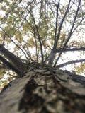 Tree. New York Nature Stock Photo