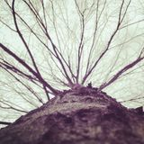 Tree. New York Nature Stock Image