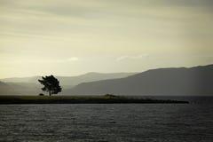 Tree in New Zealand Royalty Free Stock Photos