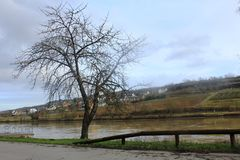A tree next to the Mosel River in the winter time. A Mosel River, in the winter time. Photo made from the Route du vin,  in Luxembourg. High level of water due Royalty Free Stock Image