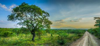 Tree next to open road in the African bush Royalty Free Stock Image