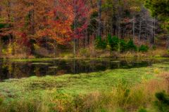Tree Near Pond in Autumn Stock Image
