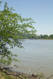 Tree next to River. Tree growing next to river royalty free stock images