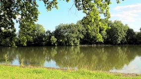 Tree next to the small rural pond. Many trees, grass and nature around. Gentle water surface with small waves, taken on summer. Blue sky with clouds, steady stock video footage