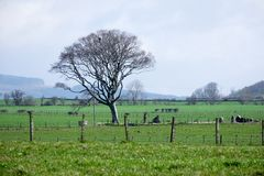 A tree next to some standing stones. On Bute Stock Photography