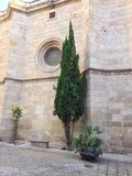 Tree next to a wall in Andalusia, spain Stock Photos