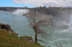 Tree and The Niagara River Stock Images