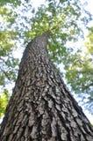 Tree. Nice, beautiful tree Royalty Free Stock Photos