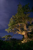 Tree at night Royalty Free Stock Photo