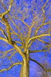 Tree at night Royalty Free Stock Photos