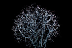 A tree at night Royalty Free Stock Image