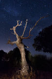 Tree during night Stock Images