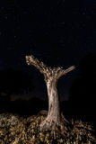 Tree during night Stock Photos