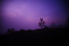 Tree at night Stock Photography