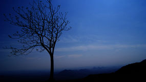 Tree at night. Field with tree on a cloudless night. stars in sky Stock Photography