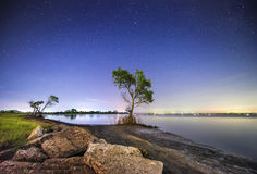 The tree at night. Tree of life among light the stars in the dark night Royalty Free Stock Photography