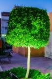 Tree with night lighting Royalty Free Stock Photos