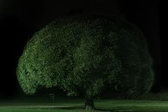 Tree at night royalty free stock photos