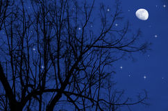 Tree at night. The tree shines at night the moon and stars Royalty Free Stock Photos