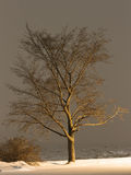 Tree at night Stock Image