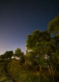Tree in the night sky Stock Photography
