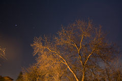Tree and night sky Royalty Free Stock Photo