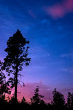 Tree in the night sky Royalty Free Stock Image