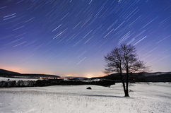 Tree at night - winter with stars Stock Image