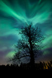 Tree and norhern lights Stock Image