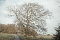 Tree in north Yorkshire countryside Royalty Free Stock Photos