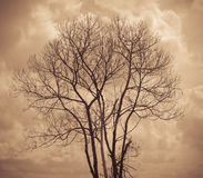 Tree is not leaves and branch of dead tree with dark cloud sky Royalty Free Stock Images