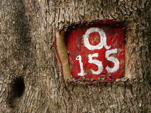 Tree number Royalty Free Stock Image