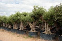 Tree nursery Stock Photography