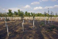 Tree Nursery Royalty Free Stock Photo