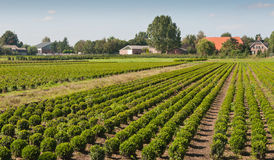 Tree nursery in the Netherlands Stock Photos