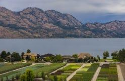 Tree Nursery Overlooking Okanagan Lake Kelowna BC Canada Royalty Free Stock Photo