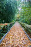 Tree nursery park in the fall. The fallen-down yellow leaves in the park Stock Image