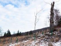 Tree nursery plantation Stock Image
