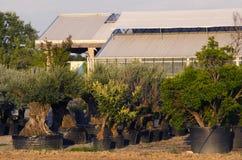 Tree nursery Stock Photos