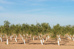 Tree nursery Stock Image