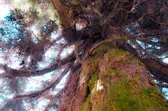 Tree nymphs Stock Photos