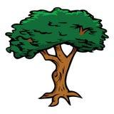 Tree oak. Cartoon vector illustration of an oak tree Stock Image