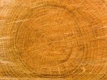 Tree an oak Stock Photos