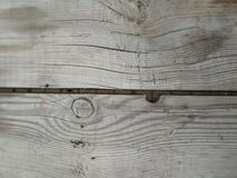Tree oak aspen acacia pine spruce pear apple cherry stock photo